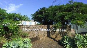 画像2: ハワイ・コナEXF・クイーン農園
